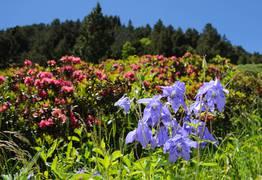 La vallée d'Eyne, vallée des fleurs en Pyrénées Catalanes