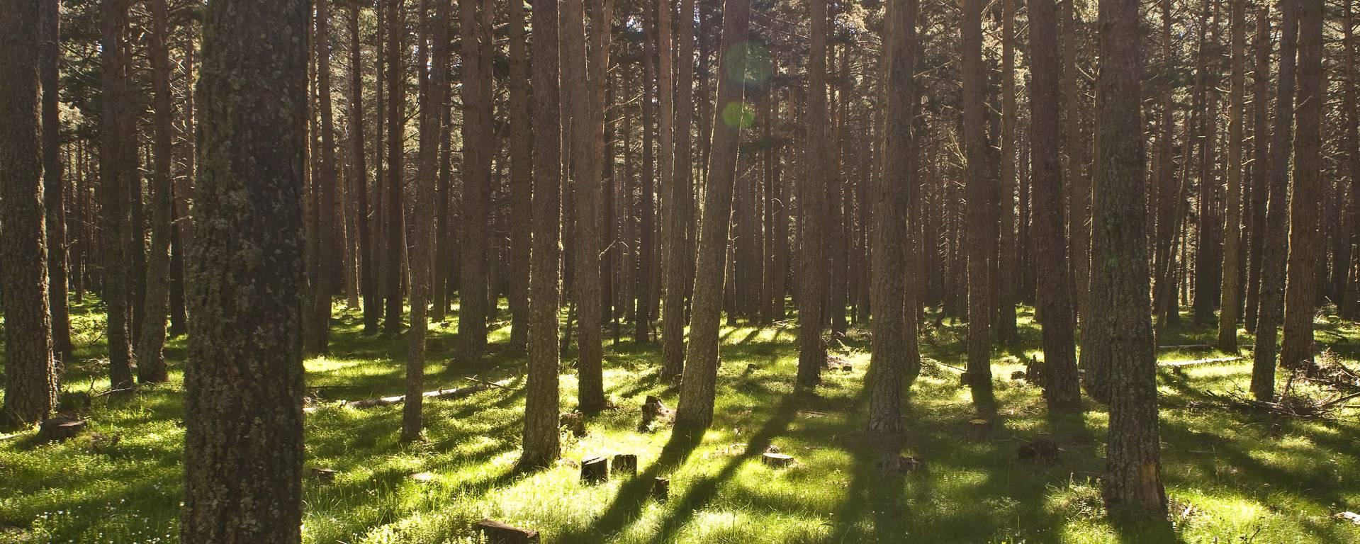 In het bos © S. Burkhardt