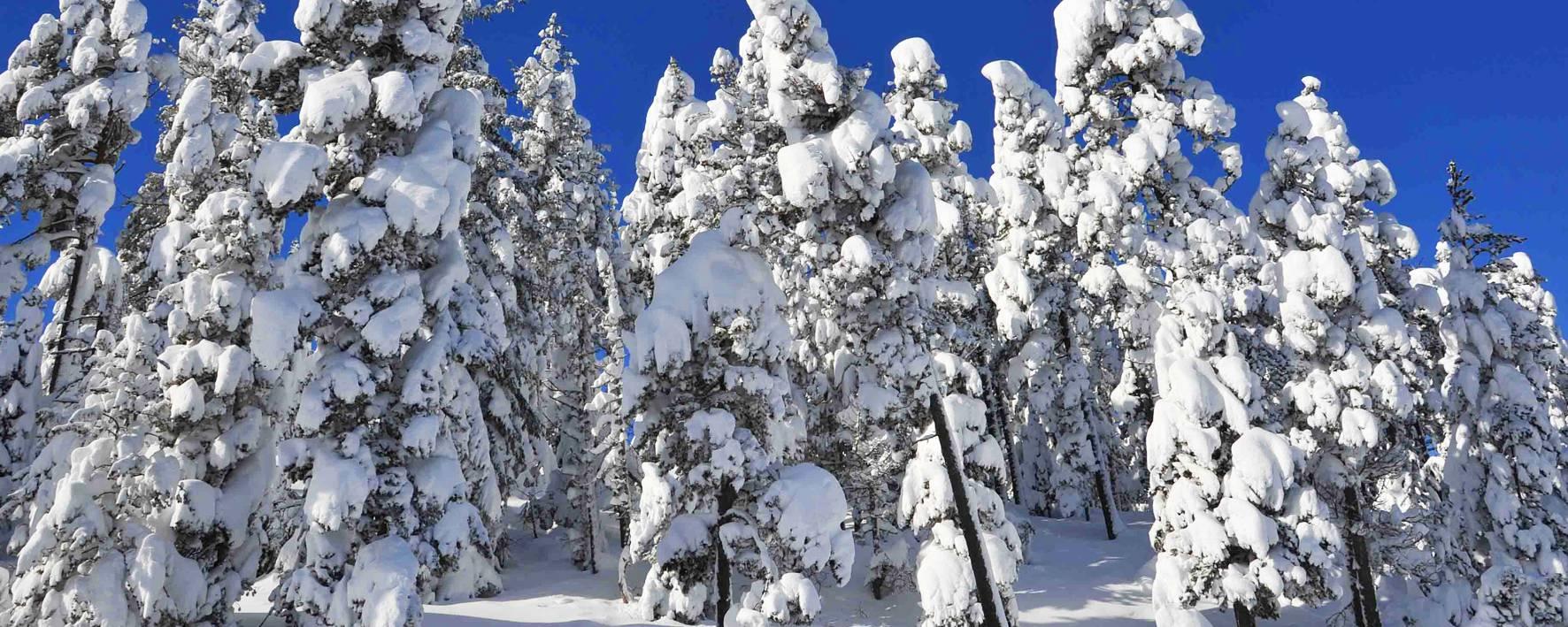 Paysage de neige © F. Berlic