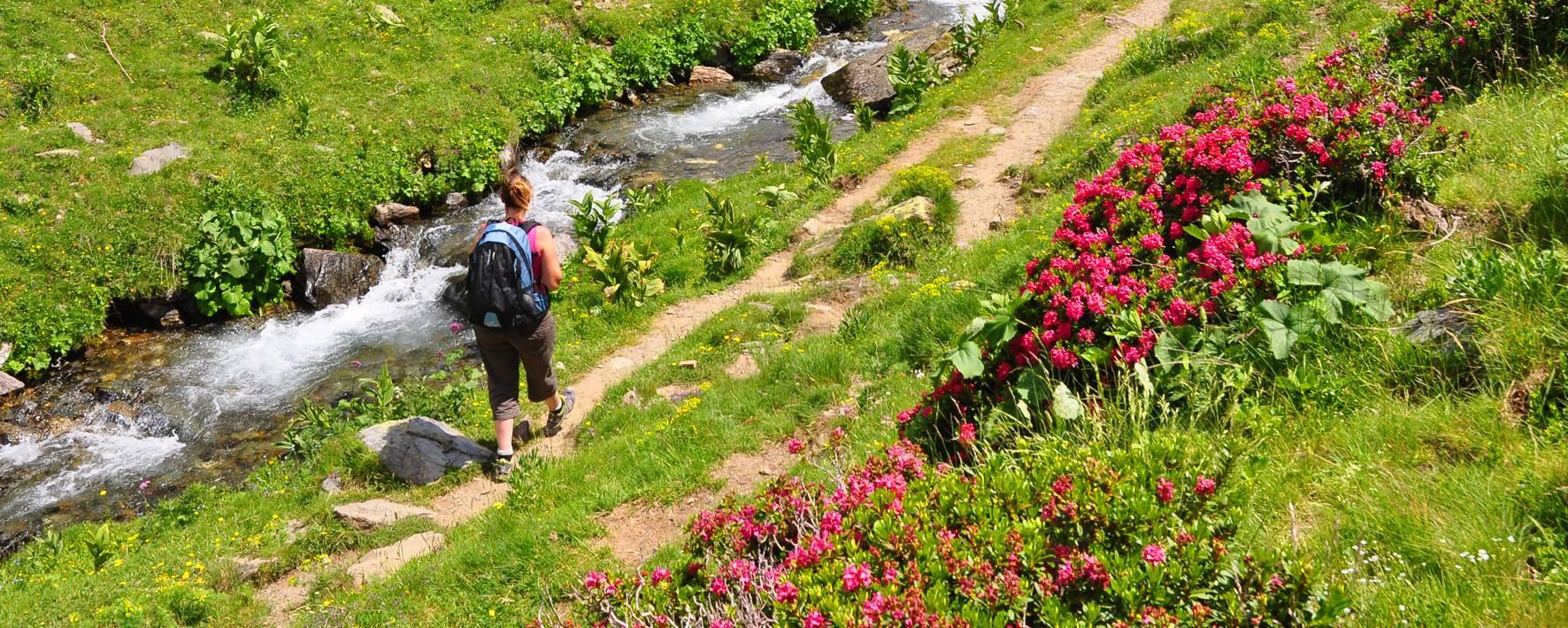 Petit ruisseau de la vallée d'Eyne en Pyrénées Catalanes