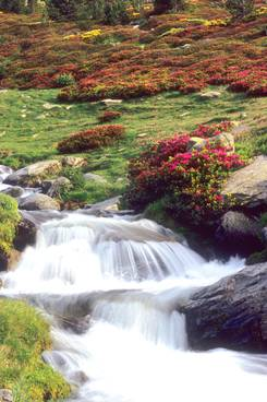 Ruisseau et rodhos